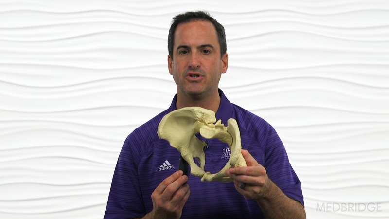 Recorded Webinar: The Hip & Pelvis: A Global Systems Approach