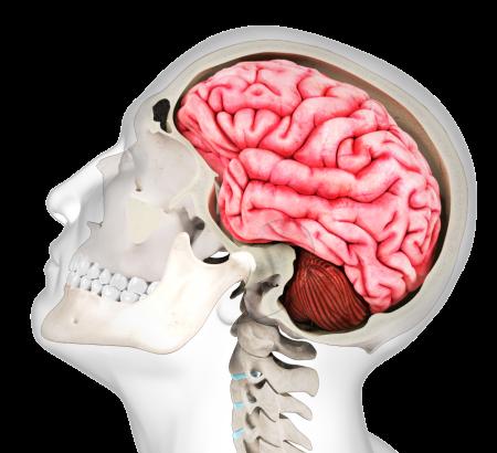 Concussion: Assessment & Medical Management   Certificate Program ...