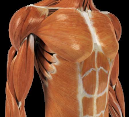 Orthopedic Excellence: The Upper Quarter